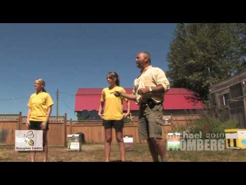 Canadian Bee Beards At Honeybee Centre 1 of 4 – Michael Fromberg