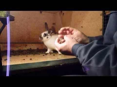 Кроличья клетки своими руками