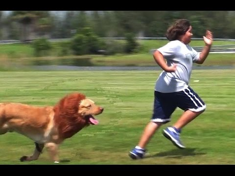 Köpeği aslan kılığına sokup insanları korkutmak...