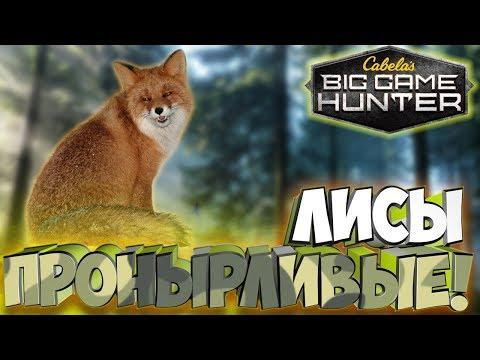 В погоне с луком за лисами! - Cabela's Big Game Hunter: Pro Hunts #5