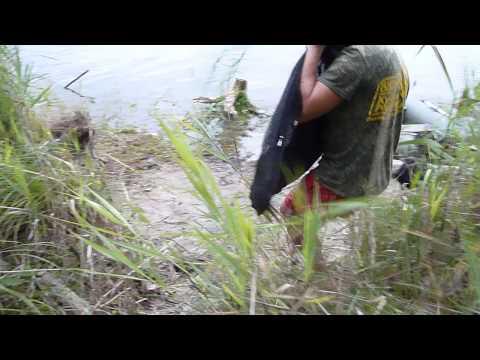 амур в июне видео