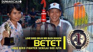 Video Dunia Kicau : INILAH! Love Bird Fighter TERMAHAL se-Indonesia, BETET Dibeli Mr Budi Senilai 500 jt MP3, 3GP, MP4, WEBM, AVI, FLV Maret 2018