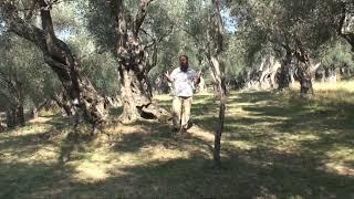 Sureja TIN - Hoxhë Bekir Halimi