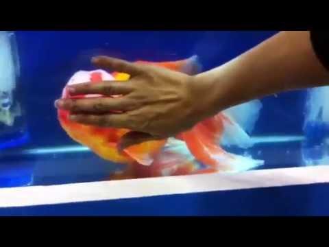 Mi date consigli su come arredare un mini acquario for Filtro vasca pesci rossi