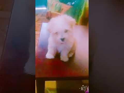 Adorable cachorro