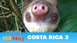 Hope For Paws in Costa Rica - rescues and super special animals! Please share. by Hope For Paws
