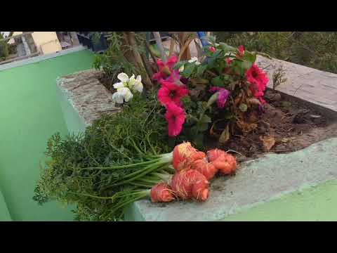 Video 🌳🐥🌳गौरैया संरक्षक Sparrow Conservation छत पर बागवानी Terrace Roof Gardening Organic Hurticulture download in MP3, 3GP, MP4, WEBM, AVI, FLV January 2017