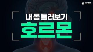 호르몬 미리보기