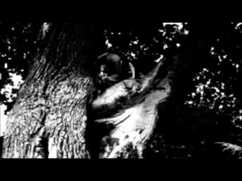 Tekst piosenki Coma - Piosenka pisana nocą (znaki gwiazd) po polsku