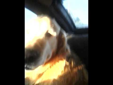 Harlem Shake - Наш друг собака (видео)