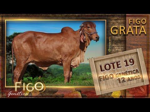 LOTE 19 - FIGO GRATA