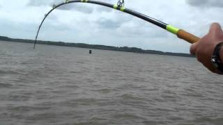 Video 104.7 Pound Wheeler Lake Blue Catfish Pt 2.mp4 MP3, 3GP, MP4, WEBM, AVI, FLV Agustus 2018