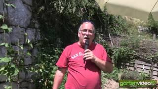 #1324 Wie werden Brombeeren zu Unkraut