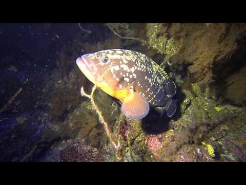 Prachtige onderwaterwereld van El Hierro