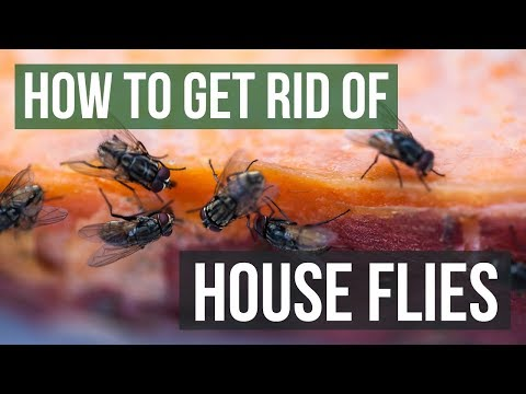 How to Get Rid of House Flies (4 Simple Steps)