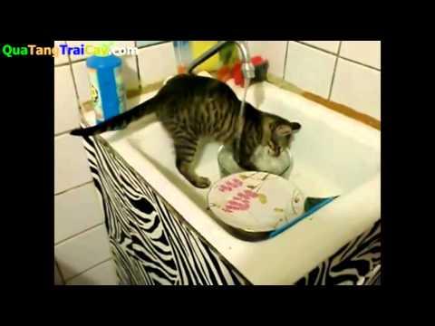 mèo rửa bát có ai thấy bao giờ chưa