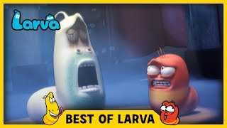 ⏩⏩⏩ SUBSCRIBE to LARVA: http://www.youtube.com/channel/UCph-WGR0oCbJDpaWmNHb5zg?sub_confirmation=1🐌 SEASON 1 - Storm Drain 🐌Red and Yellow, two strange Larva who live underneath a storm drain, encounter many surprises which fall from the outside world to their underground universe. For these two wriggly friends, anything is a good excuse for fun. See the world from Red and Yellow's point of view, and experience what a dangerous and exciting place the world can be for such small friends.🐌 SEASON 2 - HOUSE 🐌Eager to explore the world above, Red & Yellow squat in an old house stuck between high-rise buildings in the big city. Exploring their new home and meeting new creatures means more laughs for the comic duo. Sometimes they fight. Sometimes they find themselves in trouble together. A story of two cute and hilarious larva.🐌 SEASON 3 - NEW YORK 🐌Now it's the New York City. Watch Red and Yellow's incredible abilities while they explore the city. A whole new adventure in a bigger scale! The exciting survival story of two little Larva in New York.🐌 THE CHARACTERS 🐌💛 Yellow 💛 Yellow is a dimwitted and happy-go-lucky yellow colored larva with an antenna. Yellow is always abused by Red, but that never endangers their friendship. Although usually he obeys Red, he loses his mind in front of food.❤️ Red ❤️Red is a mostly hot-tempered and greedy red colored larva. His specialty is shouting and kicking like Bruce Lee. He is always showing off and abusing Yellow, but he often ends up hurting himself instead.💜 Violet 💜Violet is an oversized ghost slug. He is sometimes shown with his lower half buried in the ground. When he is threatened, he exposes his whole body and roars.🚪 Brown 🚪Brown is a cloying dung beetle that gathers poop. To him, poop is either his food or his treasure. He hates it when other insects touch his prized poop. He has a long strand of hair on his right cheek.⚫️ Black ⚫️Black is a horned atlas beetle that has great strength and is usually punching a cocoon (whi