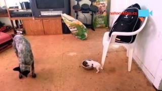 VIDEO DNE: Malej a vzteklej! Prcek ubránil celou misku žrádla!