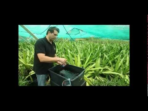 Hydroponic Gardening BAC Instructional Video Part 2 of 3