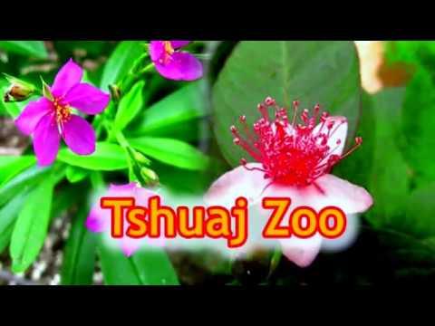 qhia tshuaj zoo hnoos tawm ntshav zoo qhov quav los ntshav & ntau yam kab mob (видео)