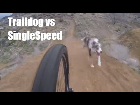 Trail Dog Vs El Mariachi SS.     GoPro Session 5 And Evo SS