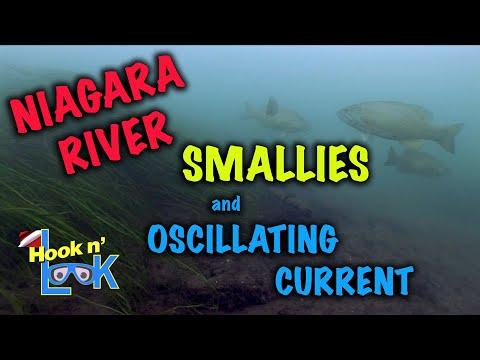 Niagara River Smallies and Oscillating CurrentNiagara River Smallies and Oscillating Current<media:title />