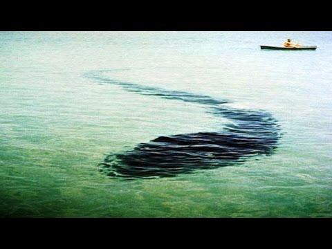 Гигантский подводный змей в Крыму. Карадагский змей (видео)