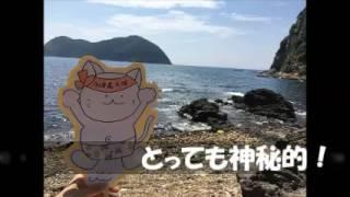 佐賀県の猫天国加唐島(かからしま)
