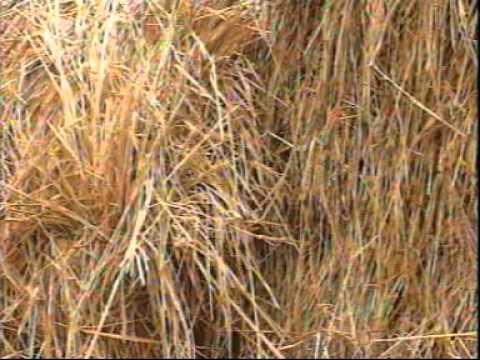 Rice Straw Composting - ICRISAT