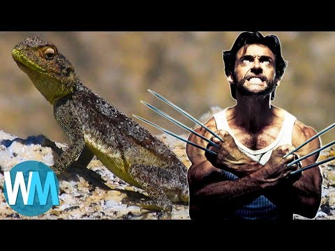 Top 10 Most Incredible Animals with Legit Superpowers (видео)