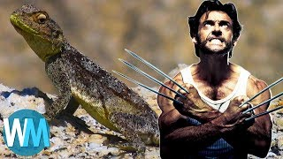 Video Top 10 Most Incredible Animals with Legit Superpowers MP3, 3GP, MP4, WEBM, AVI, FLV Mei 2017