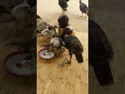 Little Girl Cries As Vultures Eat Her Food