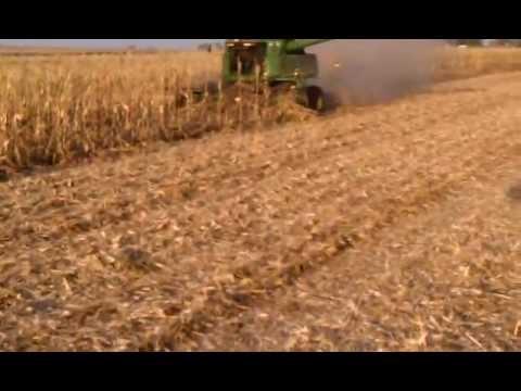 Harvesting wind damaged twin row corn