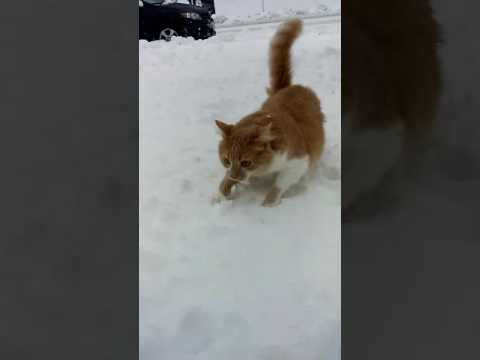 Dog Shoves Cat  s Face In Snow