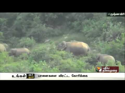 Request-to-chase-8-elephants-camping-at-Saanamaavu-Krishnagiri-district-into-the-forest-area