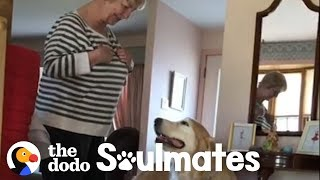 This Golden Retriever Insists on Visiting His Favorite Neighbor Every Day   The Dodo Soulmates by The Dodo