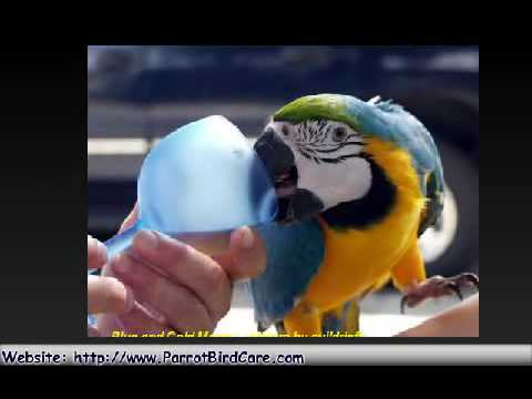 Cute and Funny Parrots