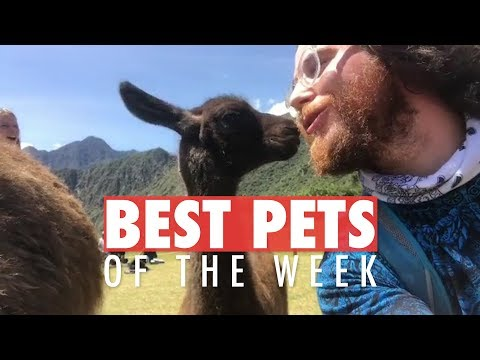 The Best Pet Videos of the Week 616810904502064051