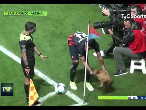 Pallohullu koirulainen keskeyttää San Lorenzo – Arsenal matsin ja antaa vielä haastattelun