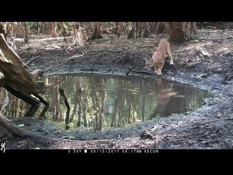 Waterhole Trail Camera Pickup