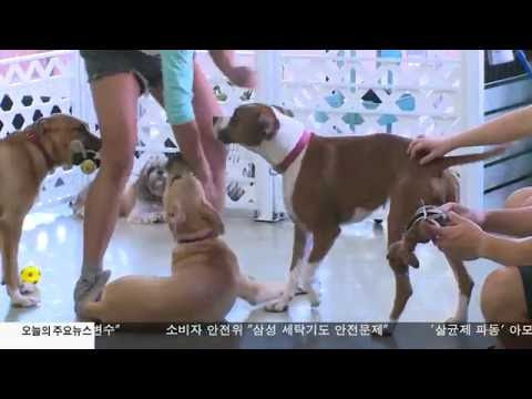 LA 유기동물 문제 해법은  9.28.16 KBS America News