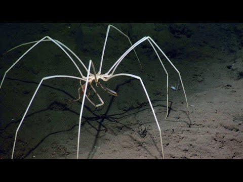 The Most Terrible Deep Sea Creatures You've Never Seen Before