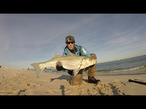 Jersey Striped Bass Surf Fishing w/ Metal Lip Swimmer's