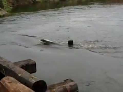ловля рыбы на нерли видео