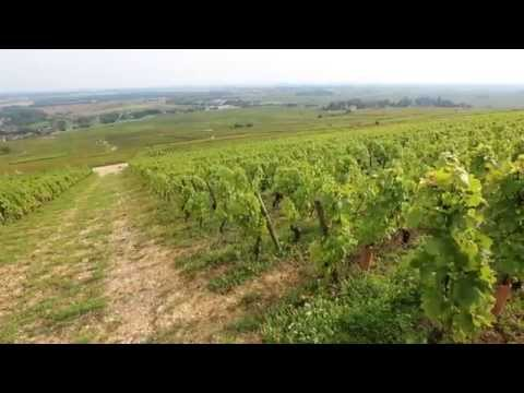 Discover The Red Wines of Burgundy