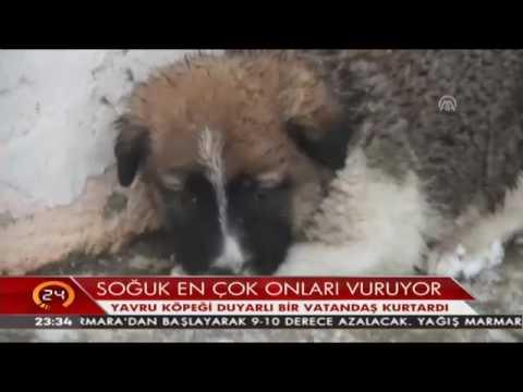 Soğuktan donmak üzere olan yavru köpeği duyarlı bir vatandaş kurtardı