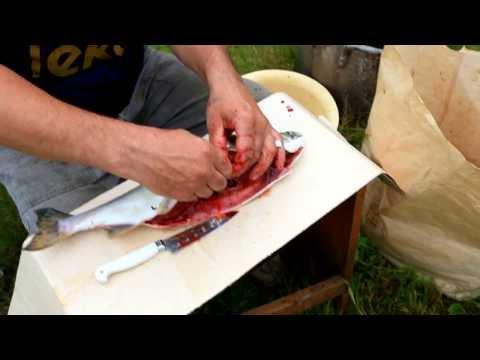 как варить красную икру на рыбалку