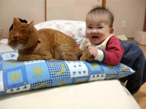 被BB咬尾巴也不生氣的貓咪,脾氣真的好好喔!