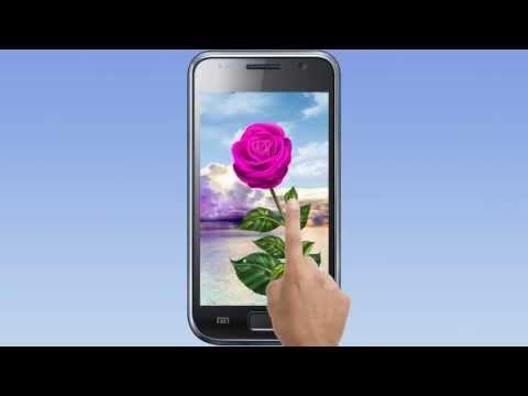 Video of Rose. Magic Touch Flowers