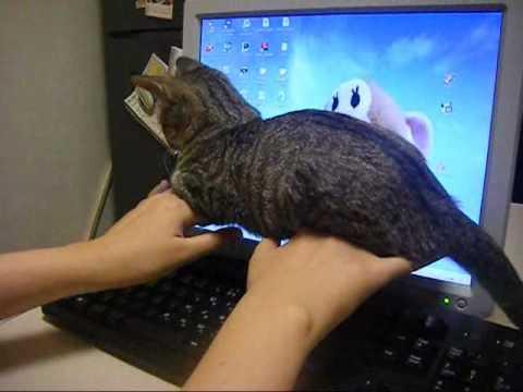 擾亂鍵盤的小貓